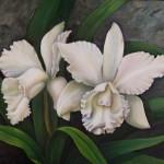 OrquideaBlanca50x60