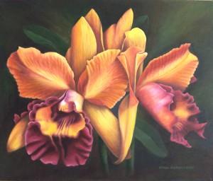 Orquídea purpura